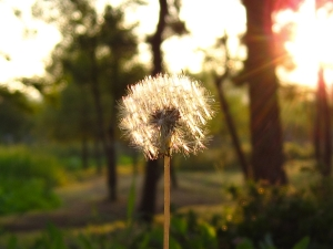 Happiness spreads like dandelions!